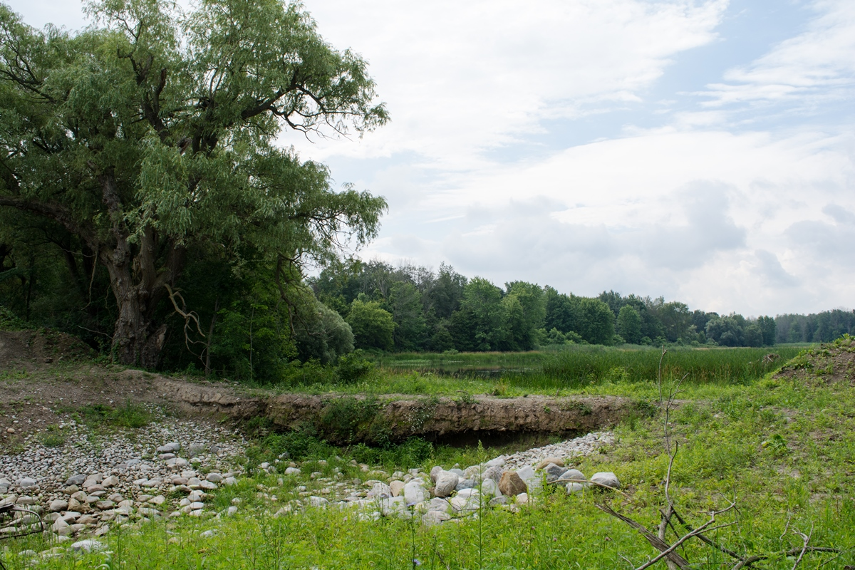 Hodges Pond Restoration